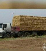 فروش کاه بسته بندی گندم با قیمت منصف