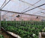 فروش گلخانه هیدروپونیک