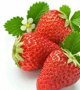 مشاوره ترویج کشت توت فرنگی کشور