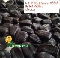 فروش تخمه روغنی در شیراز