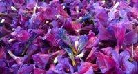 فروش عمده گیاهان دارویی در تنکابن