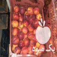 فروش شلیل در حسن آباد