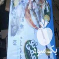 فروش ماهی قزل الا بسته بندی در تهران