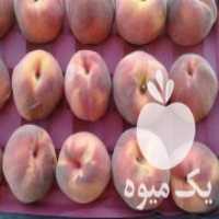 فروش هلو پاییزی در اصفهان
