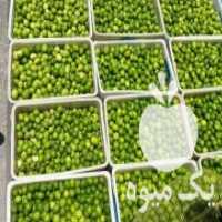 فروش لیمو ترش و  فلفل در میرآباد