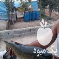 فروش ماهی زنده در ساری