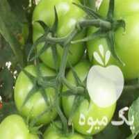 فروش گوجه گلخانه ای در همدان