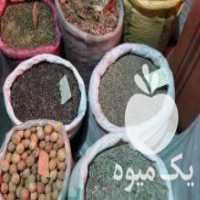 فروش گیاهان دارویی و عرقیجات سنتی در تبریز