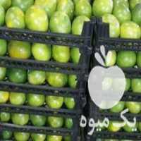 فروش نارنگی صادراتی در گرگان