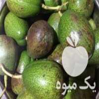 فروش میوه آواکادو تازه در تنکابن