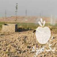 فروش 1000متر باغچه در تهران
