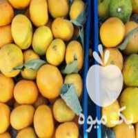 فروش نارنگی شرین مجلسی در ایلام