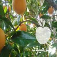 خریدار پرتقال و نارنگی در ساری