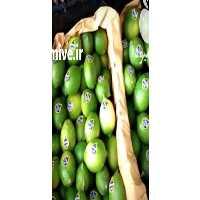 فروش لیمو ترش و شیرین در بندرعباس