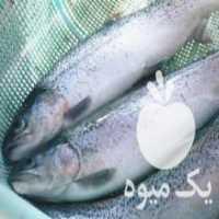 خرید ماهی قزل آلا در همدان