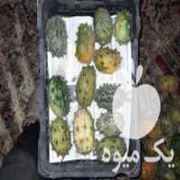 فروش کیوانو میوه در قزوین