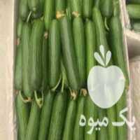فروش خیار گلخانه ای در تهران