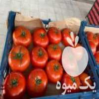 فروش عمده فلفل دلمه و صیفی جات صادراتی در تهران