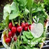 فروش پخش انواع سبزی با قیمتی عالی در دورود