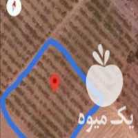 فروش باغ انگور 1300 متر اطراف اتوبان در خرمدره