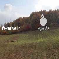فروش فروش زمین در 3 کیلومتری شهر ساری  در هرمز
