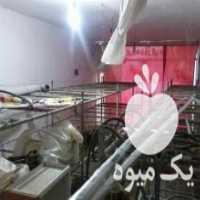 فروش کلیه لوازم پرورش قارچ دکمه ای آمل در مازندران