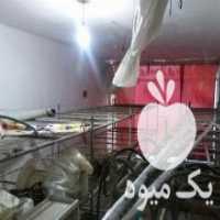 فروش فوری کلیه لوازم پرورش قارچ آمل در مازندران