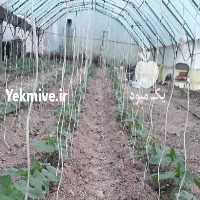 فروش گلخانه 500 متری  در اردبیل