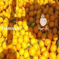 فروش پرتغال و نارنگی محلی تازه چین   در کرمانشاه