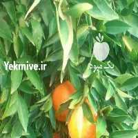 فروش فروش نارنگی یافا لبنانی   در اصفهان