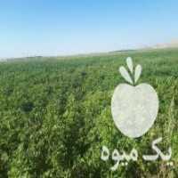 فروش اجاره زمین کشاورزی دیم و ابی در دمق