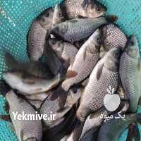 فروش آبزیان کپورکوی در تهران