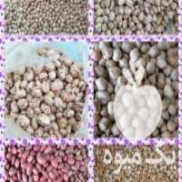 فروش انواع محصولات در شیراز