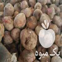 فروش چغندر وشلغم دامی در اصفهان