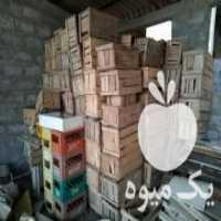 فروش جعبه چوبی پرتقال در عباس آباد
