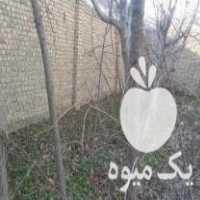 فروش درخت میوه در رباط کریم
