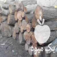 فروش تنه درخت بید و توت در زرین شهر