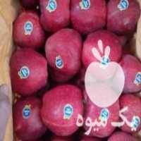 فروش انواع سیب صادراتی در مراغه