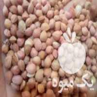 فروش مغز البالو در آذرشهر