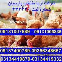 فروش تخم بلدرچین در فارس در گروه انواع تخم ها - مرغ بوقلمون پرنده عمده کشاورزی در یکمیوه