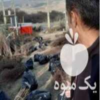 فروش نهالستان سردشت نهال در اصفهان