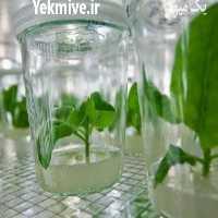 فروش دوره آموزشی کشت بافت گیاهی در تهران