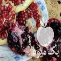 فروش قلمه انار دانه مشکی در سیرجان