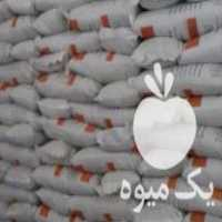 فروش سویا سبحان در کرمانشاه