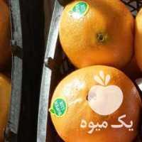 فروش پرتقال و کیوی در تنکابن
