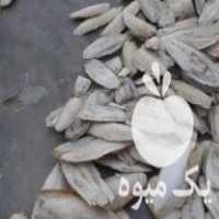 فروش کف دریا پرنده در اصفهان