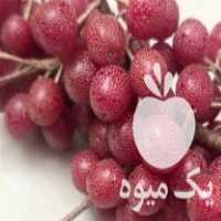 فروش بذر میوه های خارجی در قزوین
