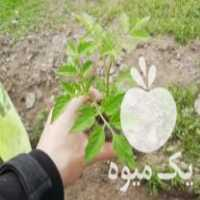 فروش فلفل آستااااانه در آستانه اشرفیه
