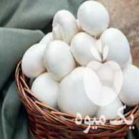 فروش تجهیزات پرورش قارچ دکمه ای آمل در مازندران
