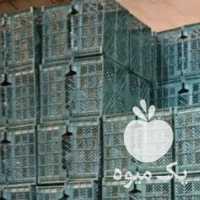 فروش سبد های سیب در مراغه